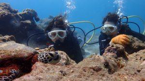 屋久島体験ダイビングでウミガメと一緒に泳ごう!