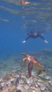 屋久島シュノーケリング体験ダイビングウミガメ
