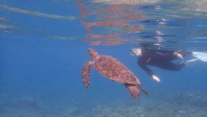 屋久島シュノーケリング体験ダイビングウミガメ2