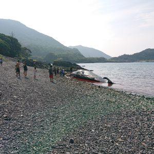 屋久島でマッコウクジラ